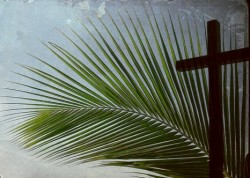 """""""Palm Sunday-Up Close and Personal"""""""
