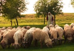 """God the Son is Our Good Shepherd"""